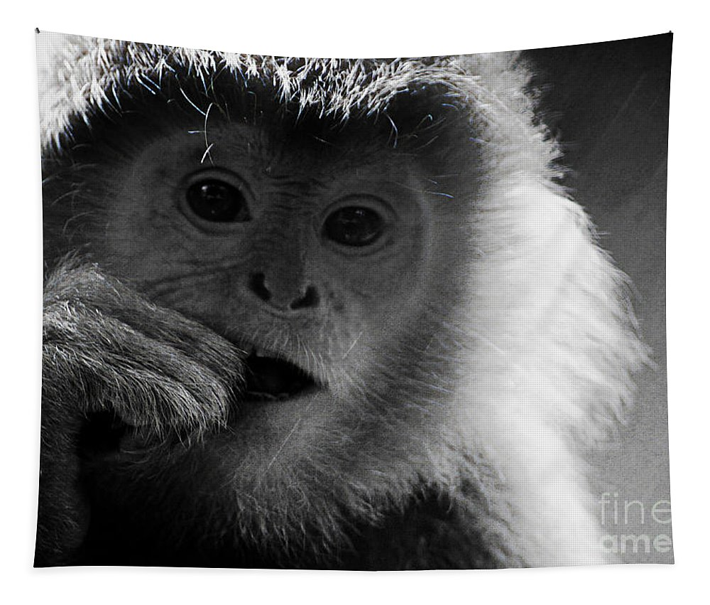 Animals Tapestry featuring the photograph Hungry by Ben Yassa