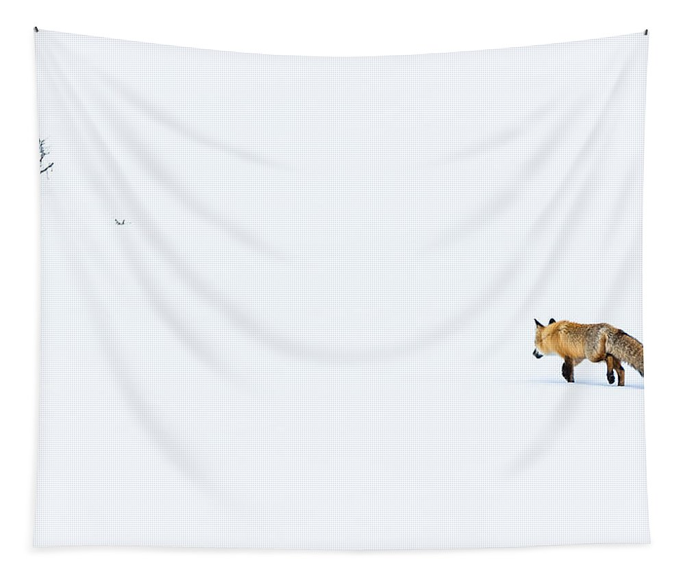 Fox Tapestry featuring the photograph Hunting In White by Yeates Photography
