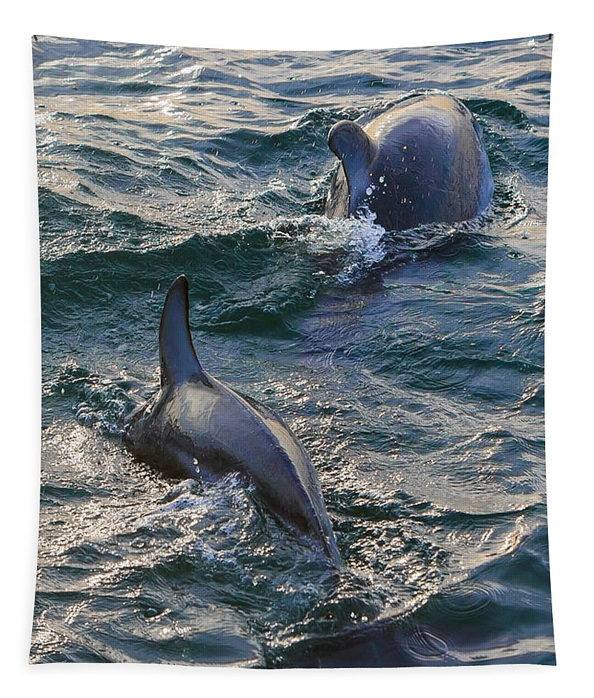 Dolphins Tapestry featuring the photograph I Criss You Cross by Scott Campbell