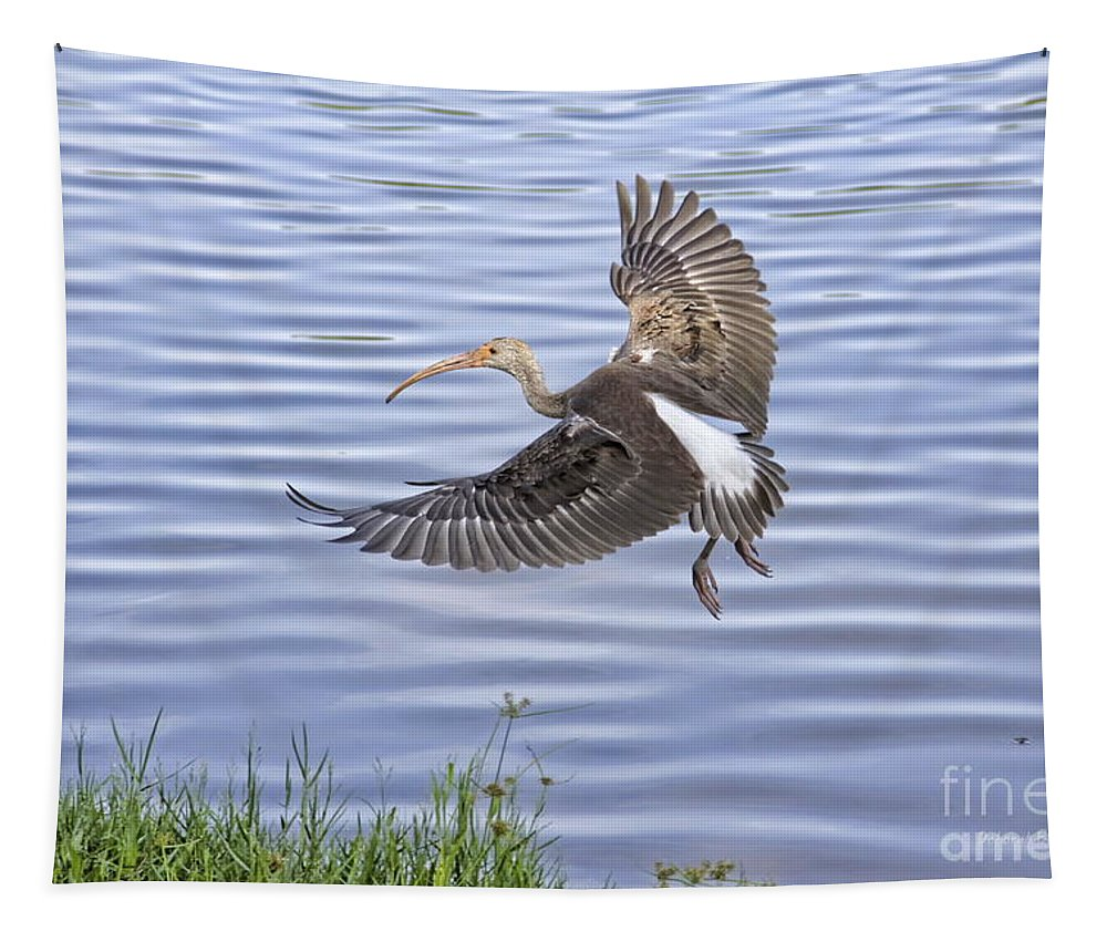 Ibis Tapestry featuring the photograph Ibis Incoming by Deborah Benoit