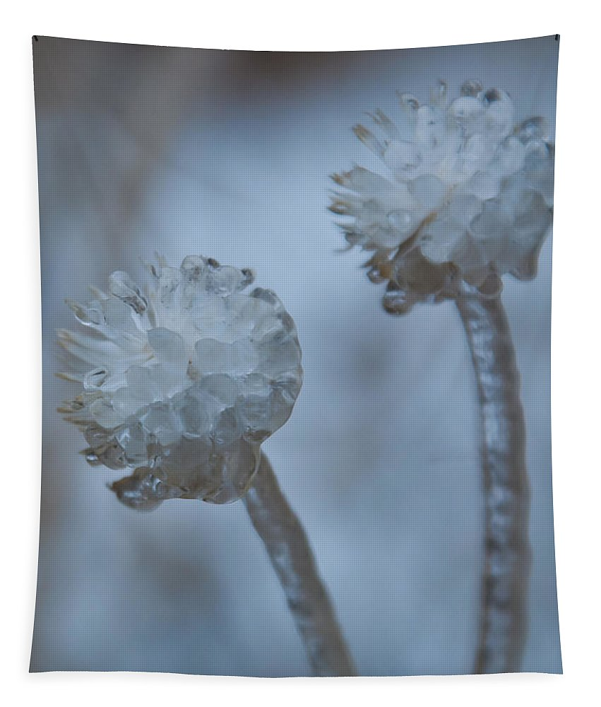 Flower Tapestry featuring the photograph Ice-covered Winter Flowers With Blue Background by Cascade Colors