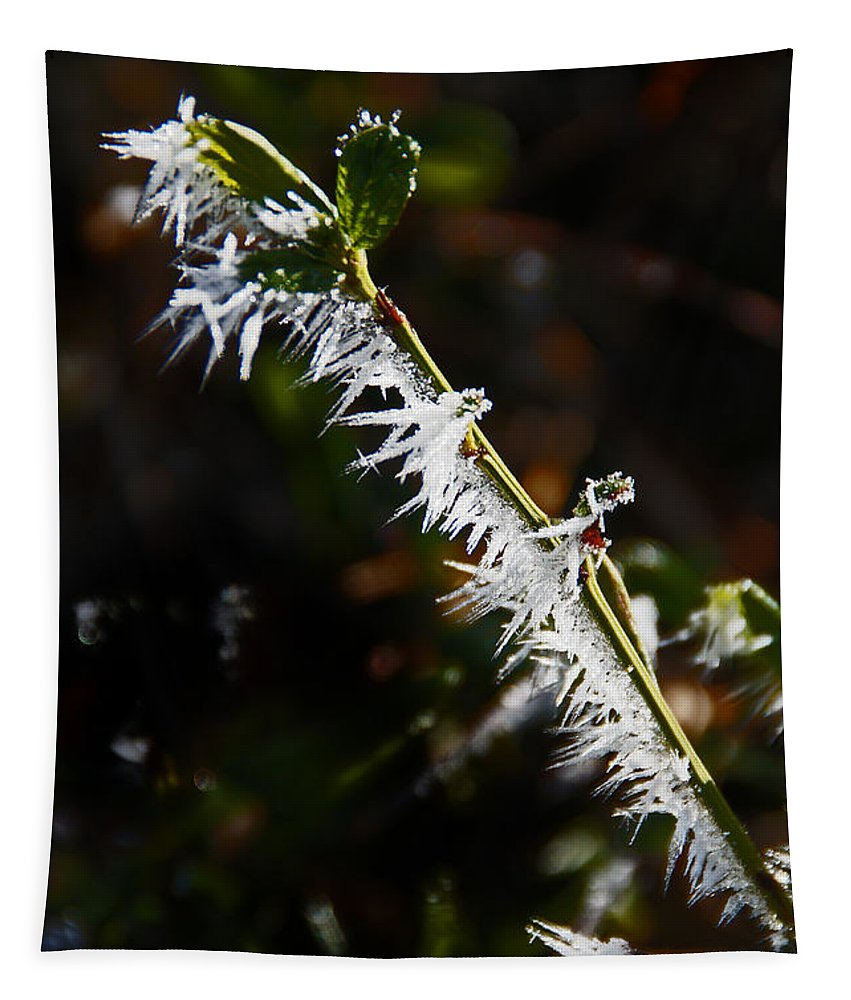 Ice Tapestry featuring the photograph Ice Crystals In Morning Sun by Mick Anderson