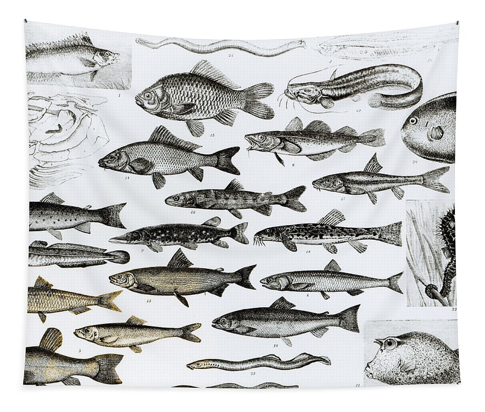Fish Tapestry featuring the drawing Ichthyology by English School