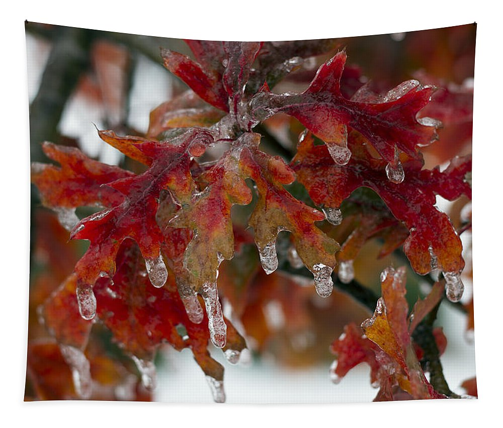 Oak Tree Tapestry featuring the photograph Icy Oak by Debby Richards