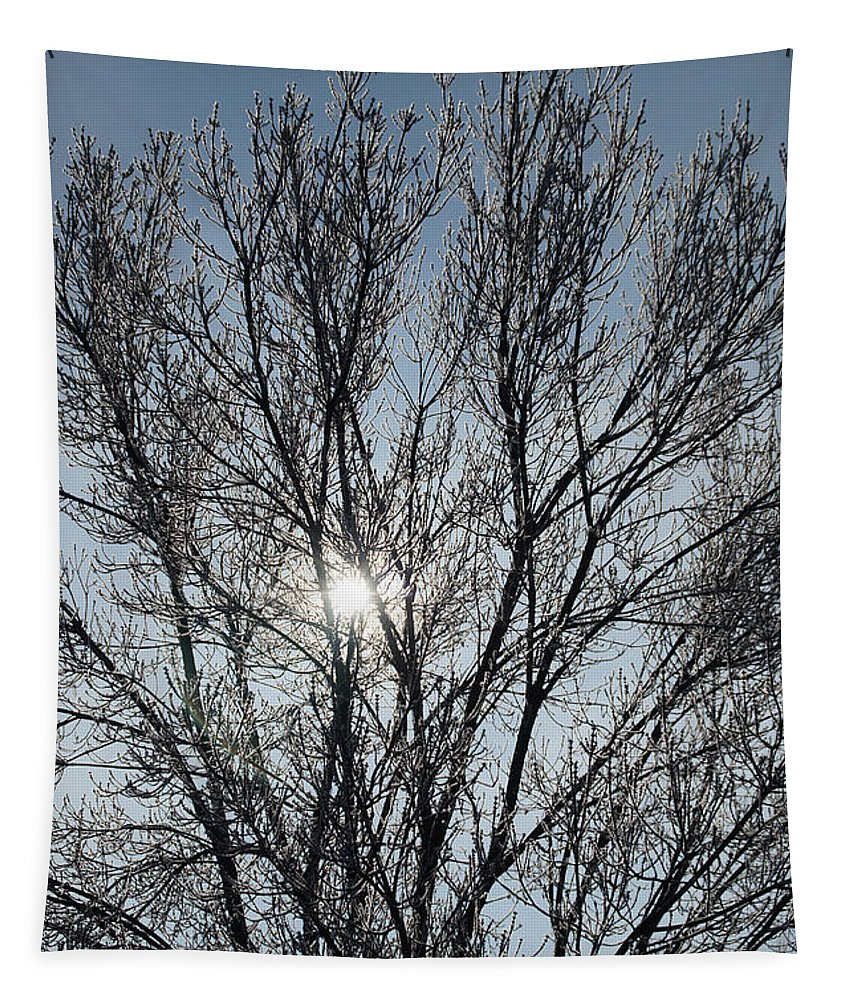 Icy Tapestry featuring the photograph Icy Tree - Winter Morning by Mick Anderson