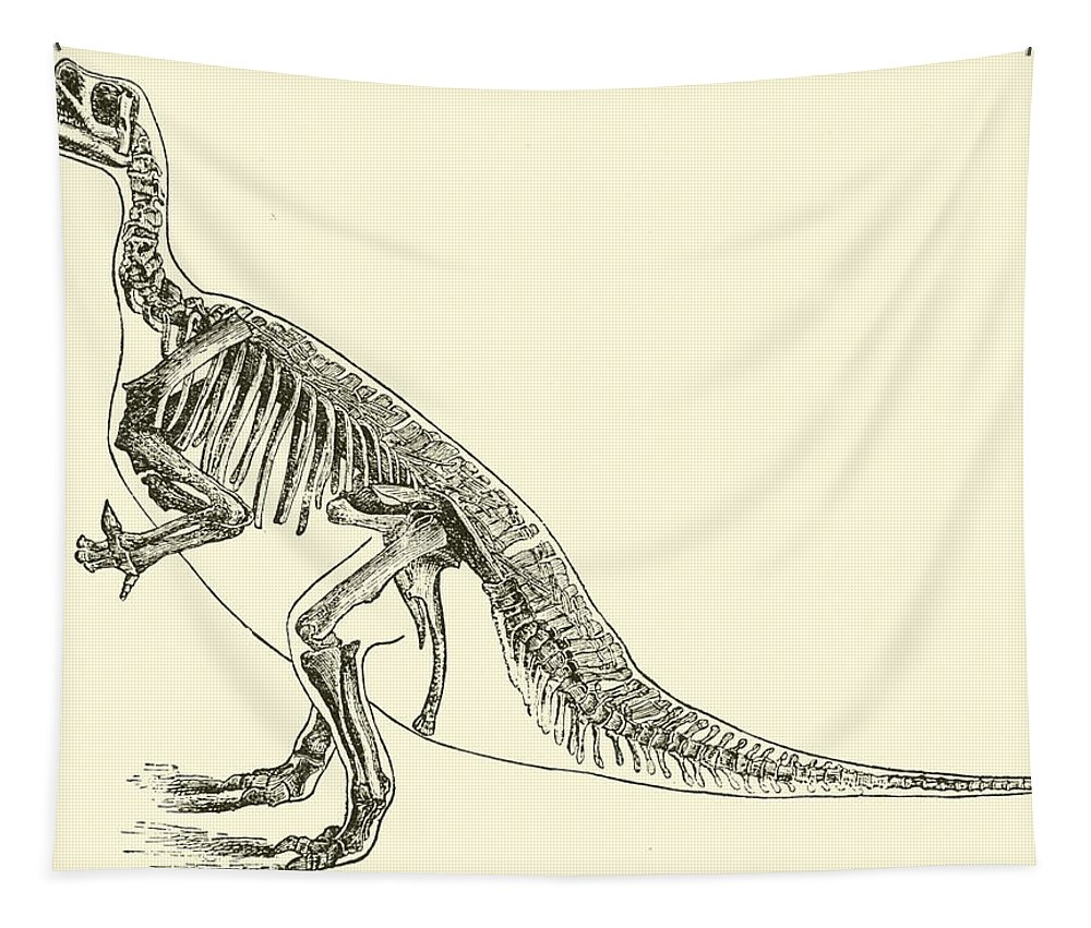 Iguanodon Bernissartensis Tapestry featuring the drawing Iguanodon by English School