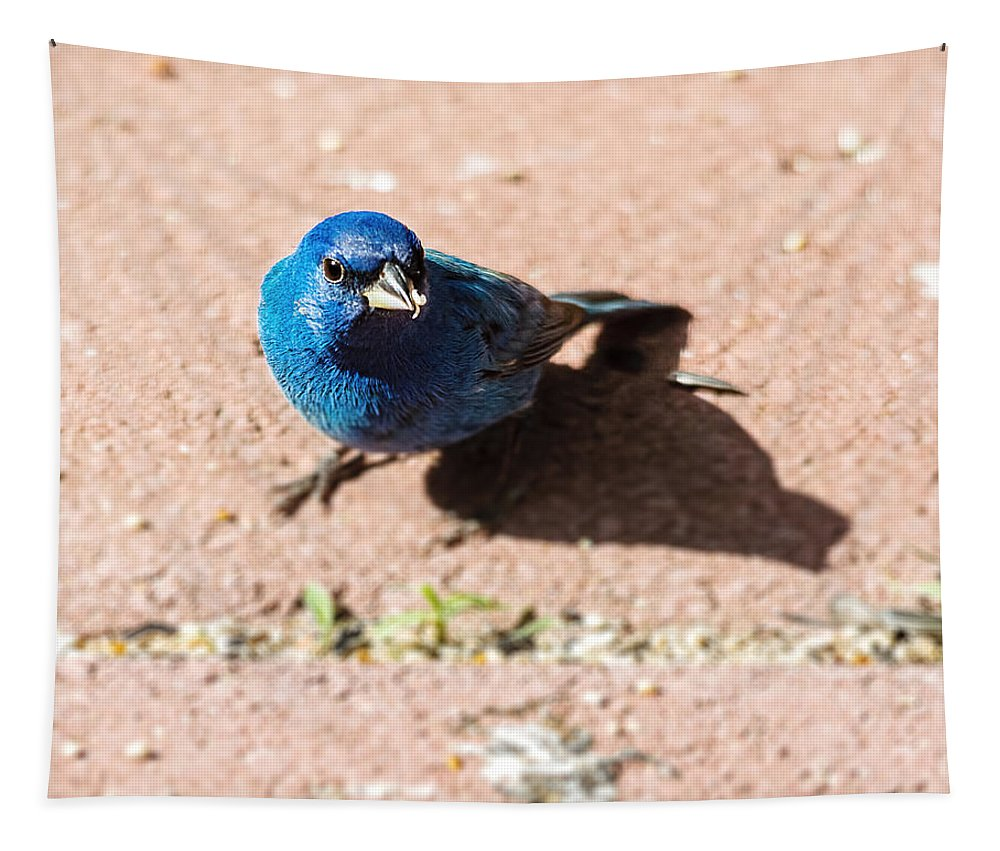 Bunting Tapestry featuring the photograph Indigo Bunting by Jon Woodhams