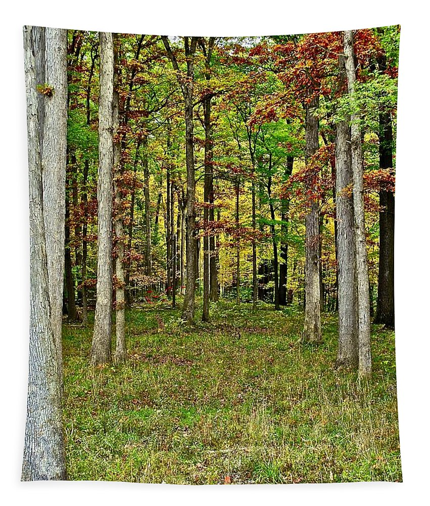 Autumn Tapestry featuring the photograph Into The Void by Frozen in Time Fine Art Photography