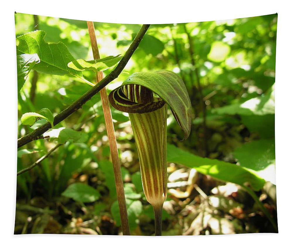 Wild Jack In The Pulpit Tapestry featuring the photograph Jack In The Pulpit by Sherman Perry