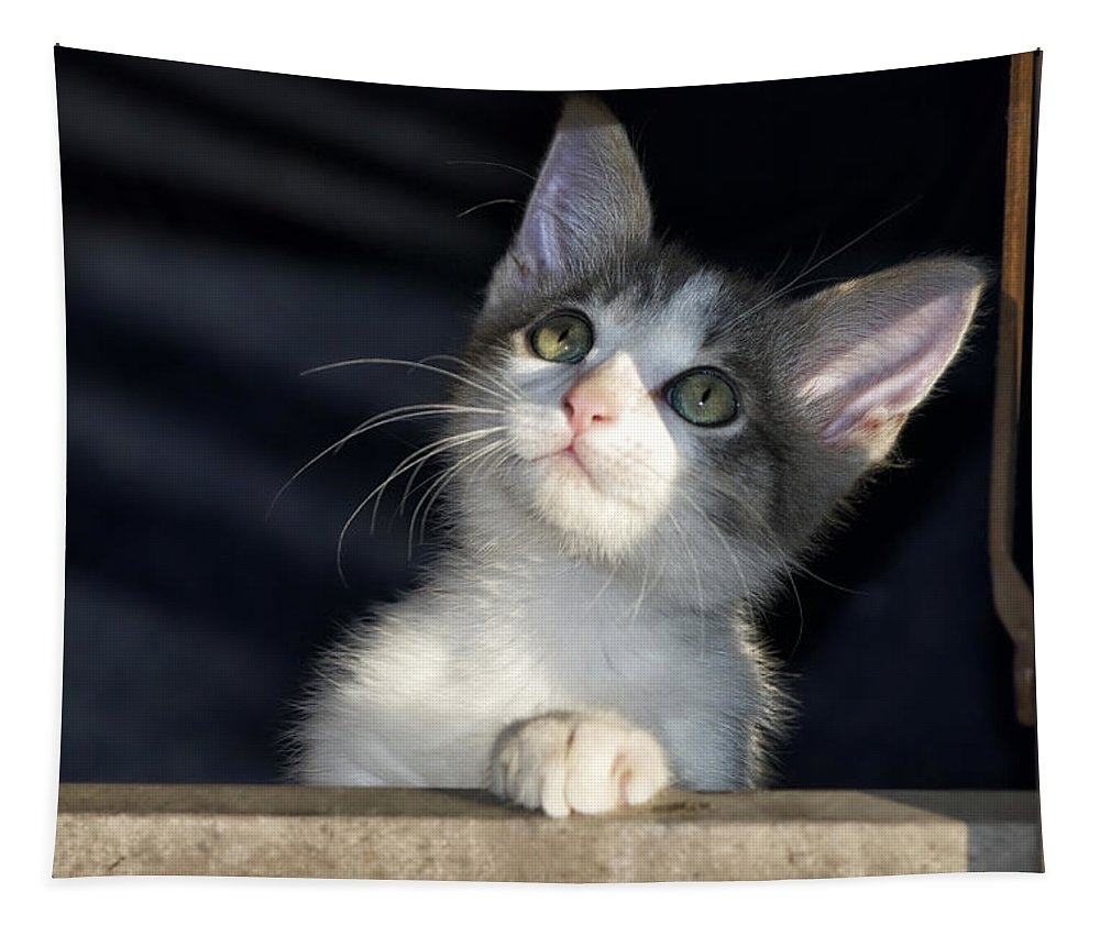 Cat Tapestry featuring the photograph Jackson Is Always Inquisitive by Thomas Woolworth