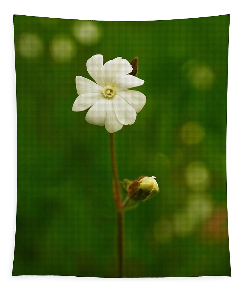 Flower Tapestry featuring the photograph Just A Little White Flower by Jeff Swan