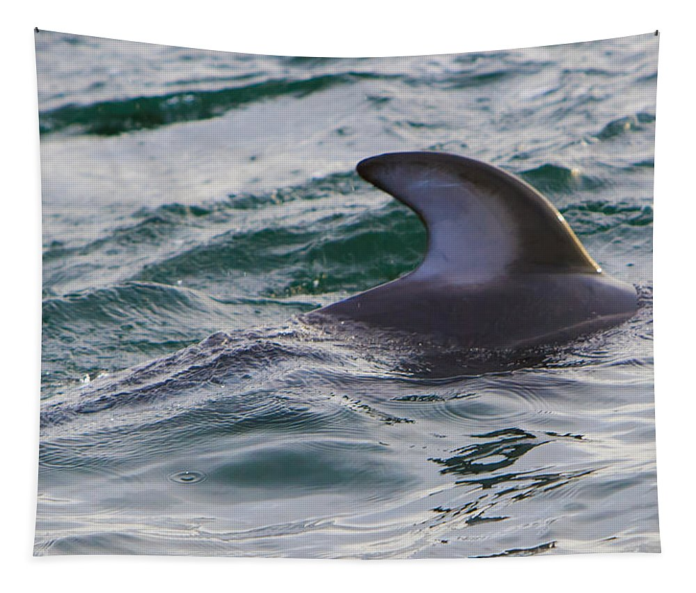 Dolphins Tapestry featuring the photograph Just The Dorsal by Scott Campbell