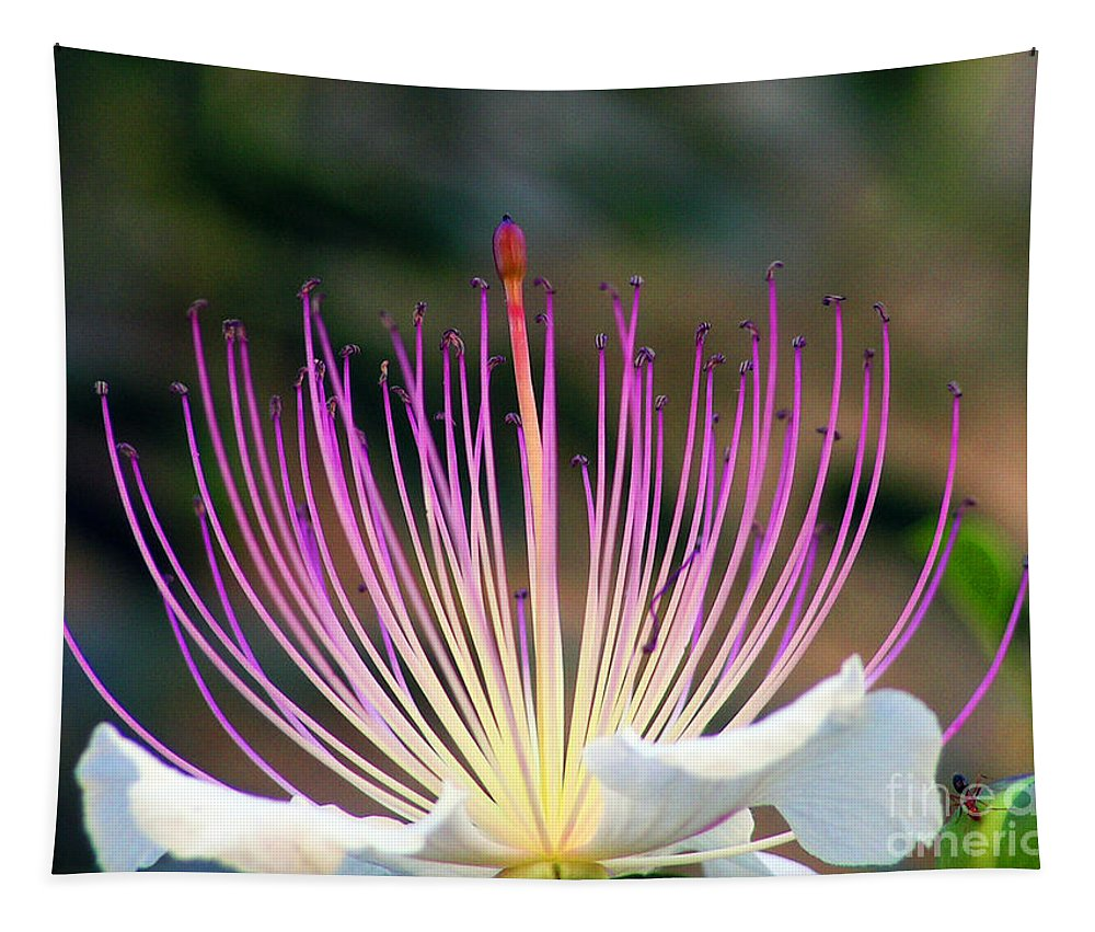 Flowers Tapestry featuring the photograph Just Woke Up by Ben Yassa