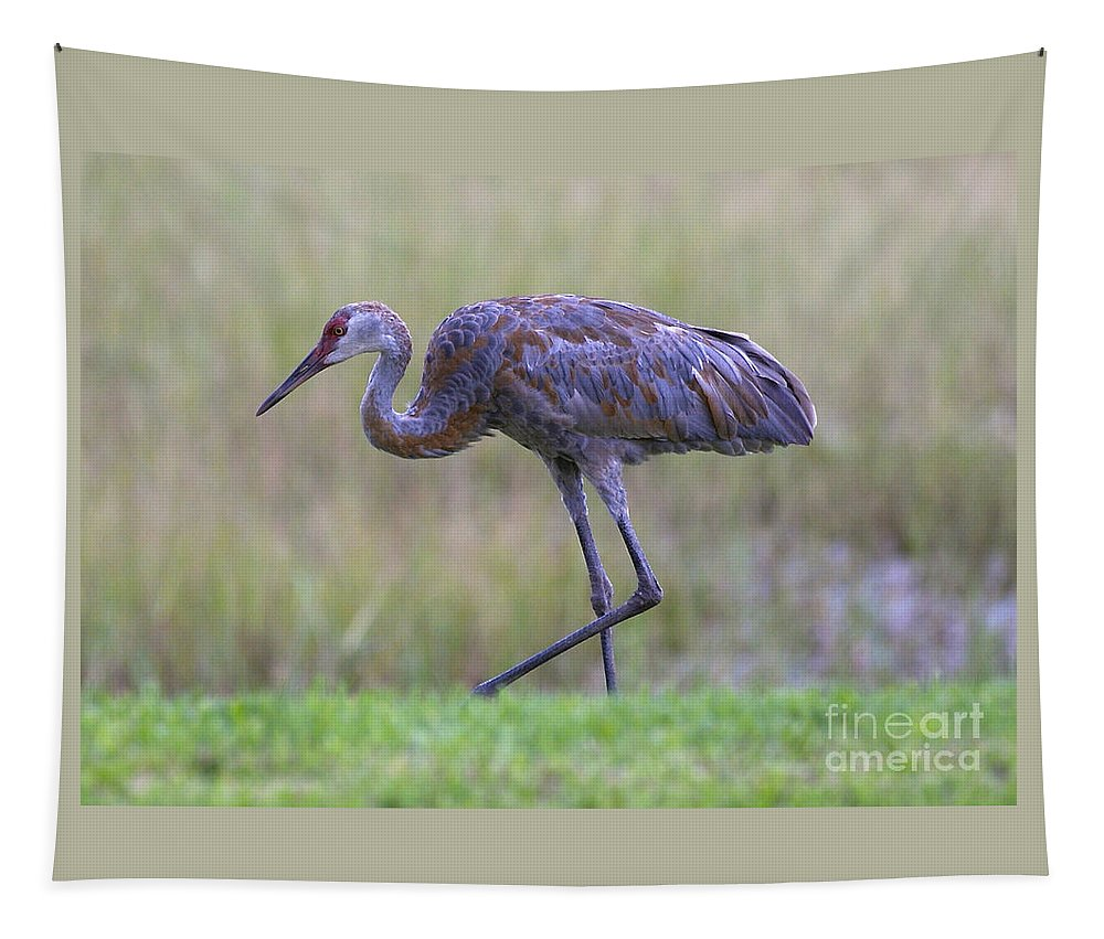 Tapestry featuring the photograph Juvenile Sandhill by Carol Groenen