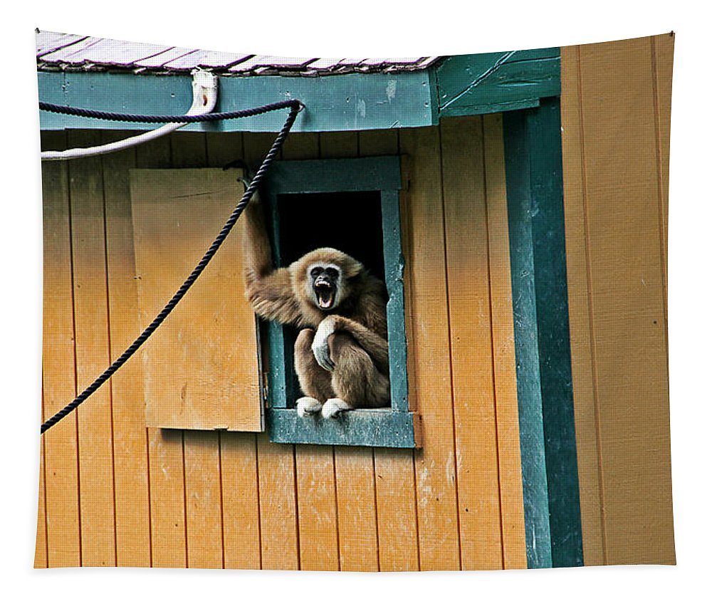 Monkey In A Window Photograph Tapestry featuring the photograph Keep It Down Out There by Dan Sproul