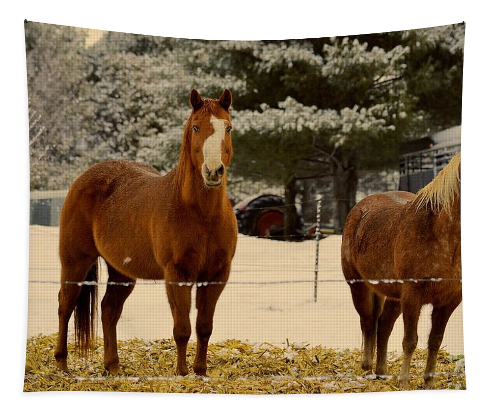 Horse Tapestry featuring the photograph Keeping Warn by Bonfire Photography