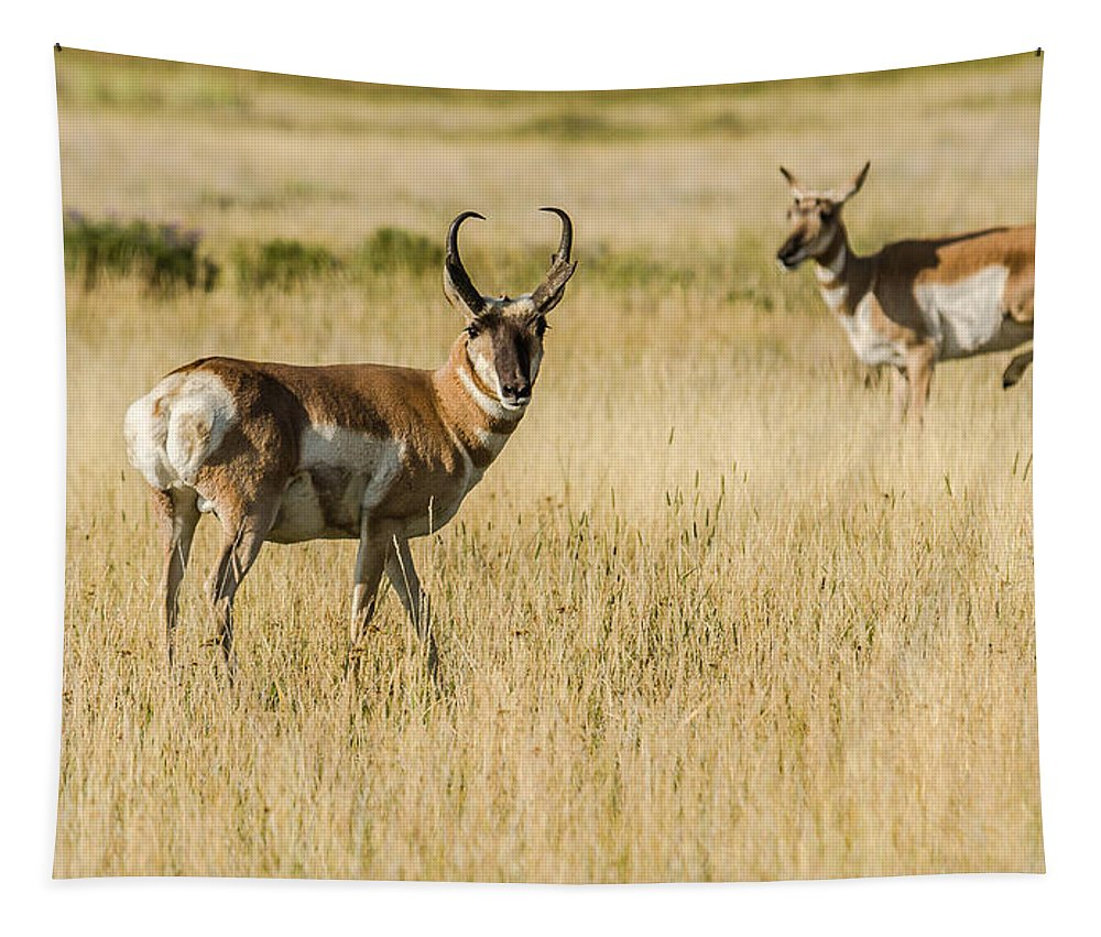 Pronghorn Buck Tapestry featuring the photograph King Of The Herd by Yeates Photography