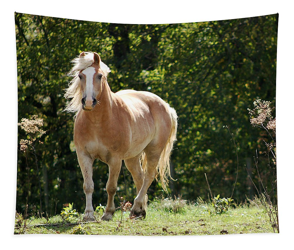 Horse Tapestry featuring the photograph King Of The Hill by Annette Persinger