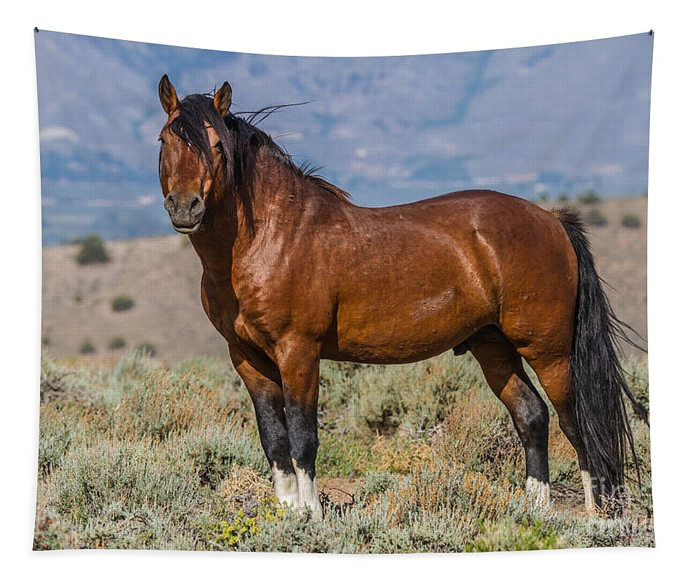 The Stud Tapestry featuring the photograph King Of The Hill by Mitch Shindelbower