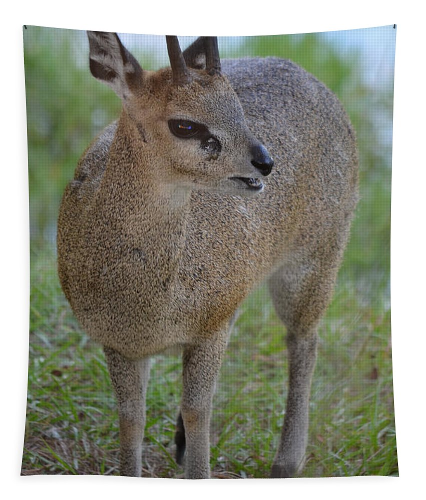 Klipspringer Tapestry featuring the photograph Klipspringer by Richard Bryce and Family