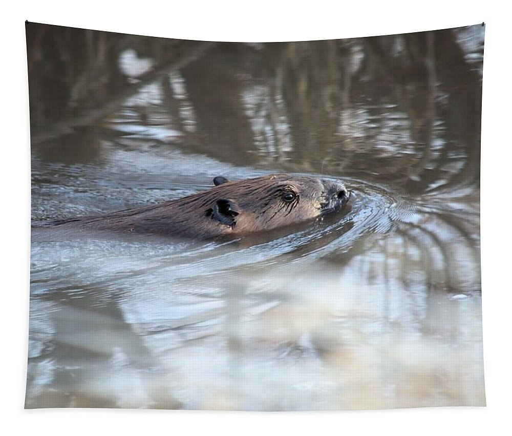 Beaver Tapestry featuring the photograph Knife In Water by Bonfire Photography