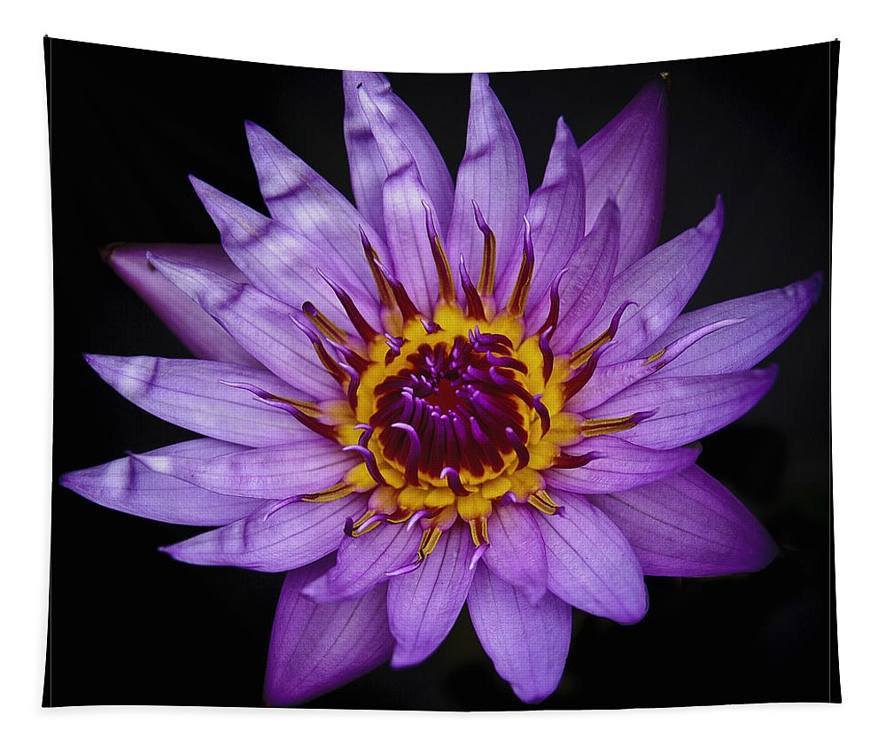 L I L Y Tapestry featuring the photograph L I L Y by Wes and Dotty Weber