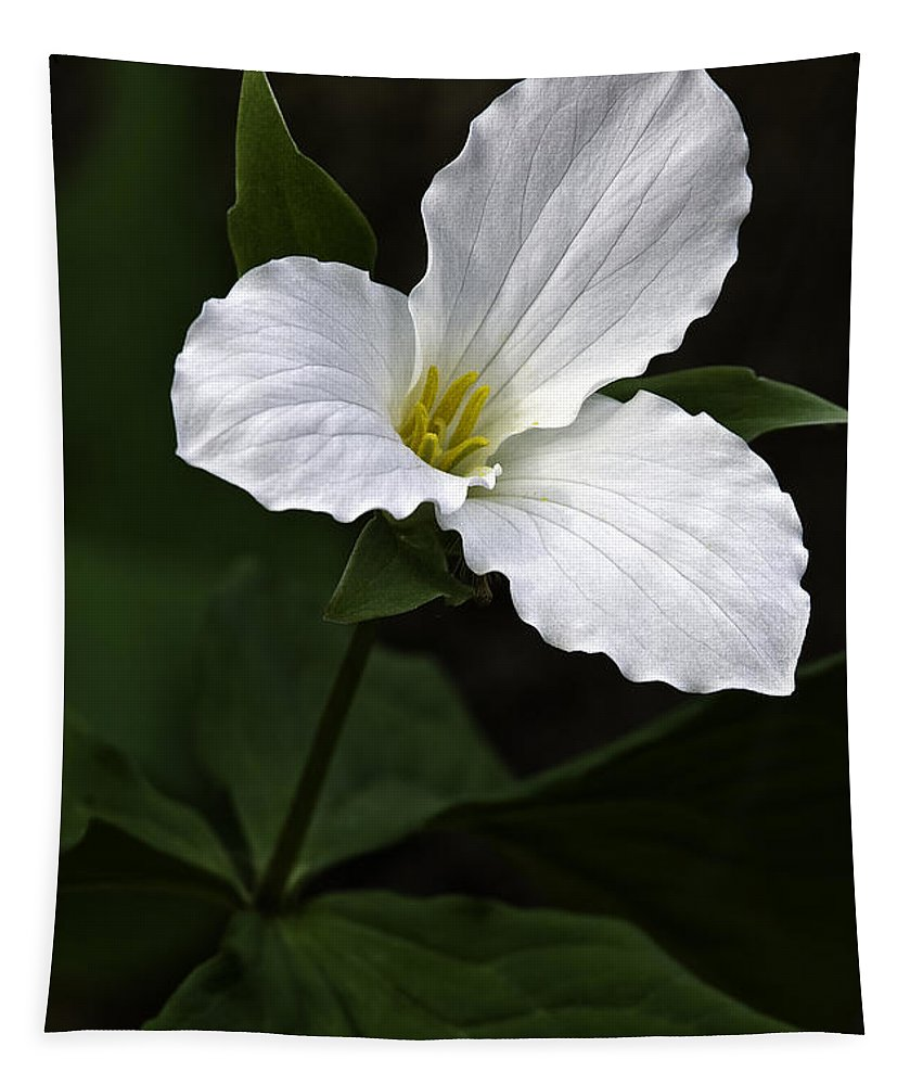 Large Flowered Trillium Tapestry featuring the photograph Large Flowered Trillium by Dale Kincaid
