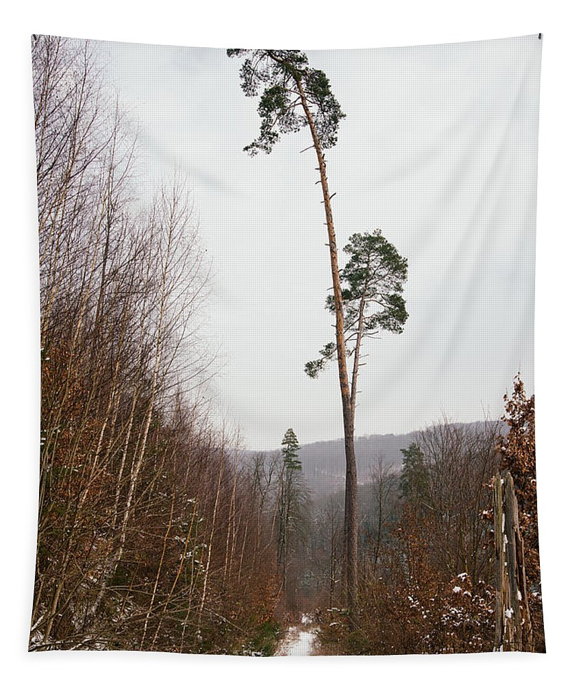 Winter Tapestry featuring the photograph Large Trees In The Nature Park In Winter by Matthias Hauser