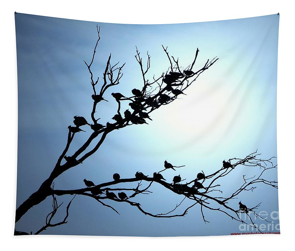Birds Tapestry featuring the photograph Lasy Birds by Ben Yassa