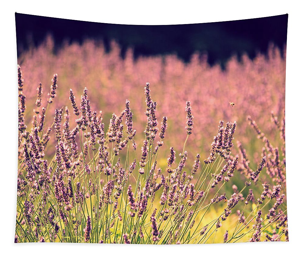 Lavender Tapestry featuring the photograph Lavender Dreams by Lynn Sprowl
