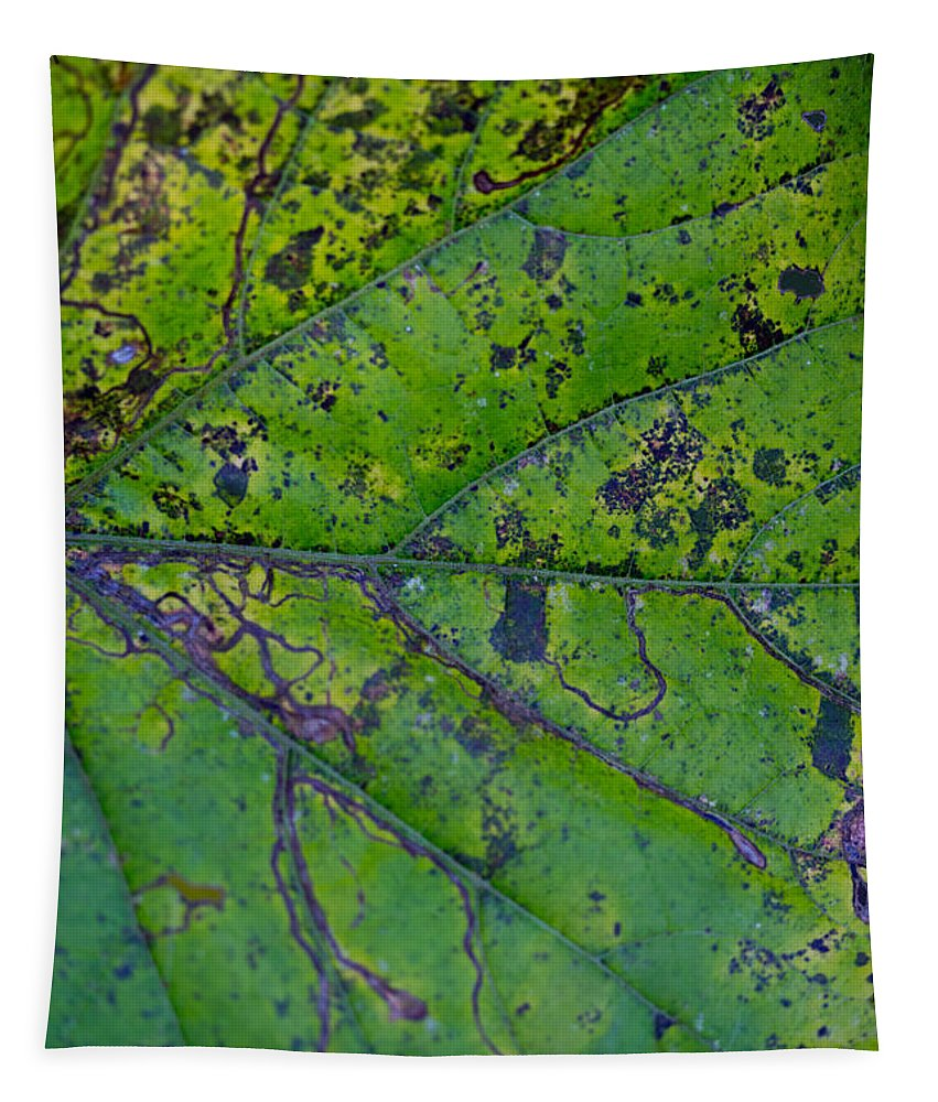 Macro Tapestry featuring the photograph Leaf Macro by Robert Storost