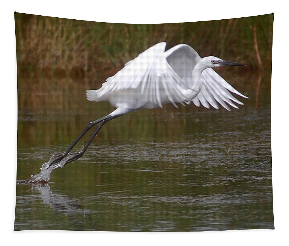 Bird Tapestry featuring the photograph Leaping Egret by Leticia Latocki