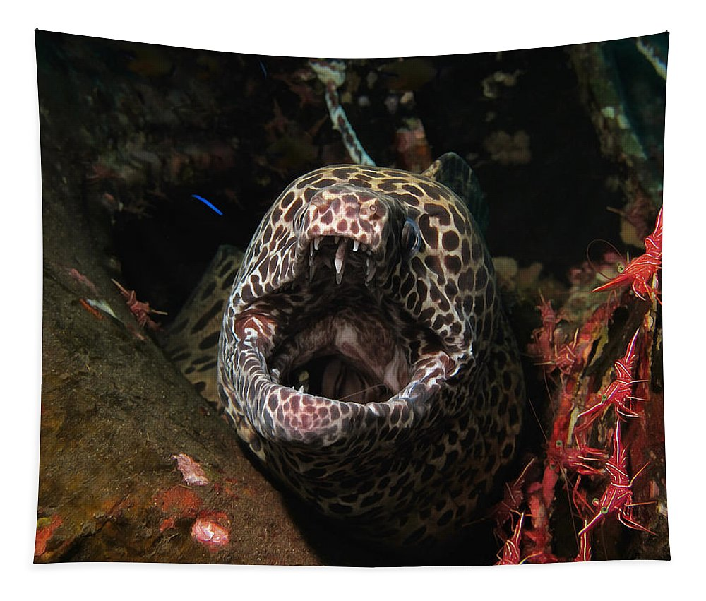 Moray Leopard Tapestry featuring the photograph Leopard Moray by Sergey Lukashin