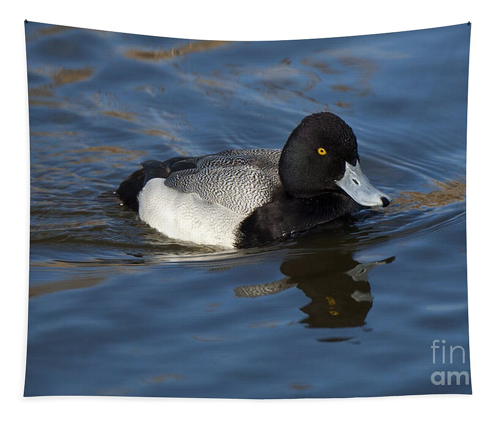 Duck Tapestry featuring the photograph Lesser Scaup Drake by Bob Christopher