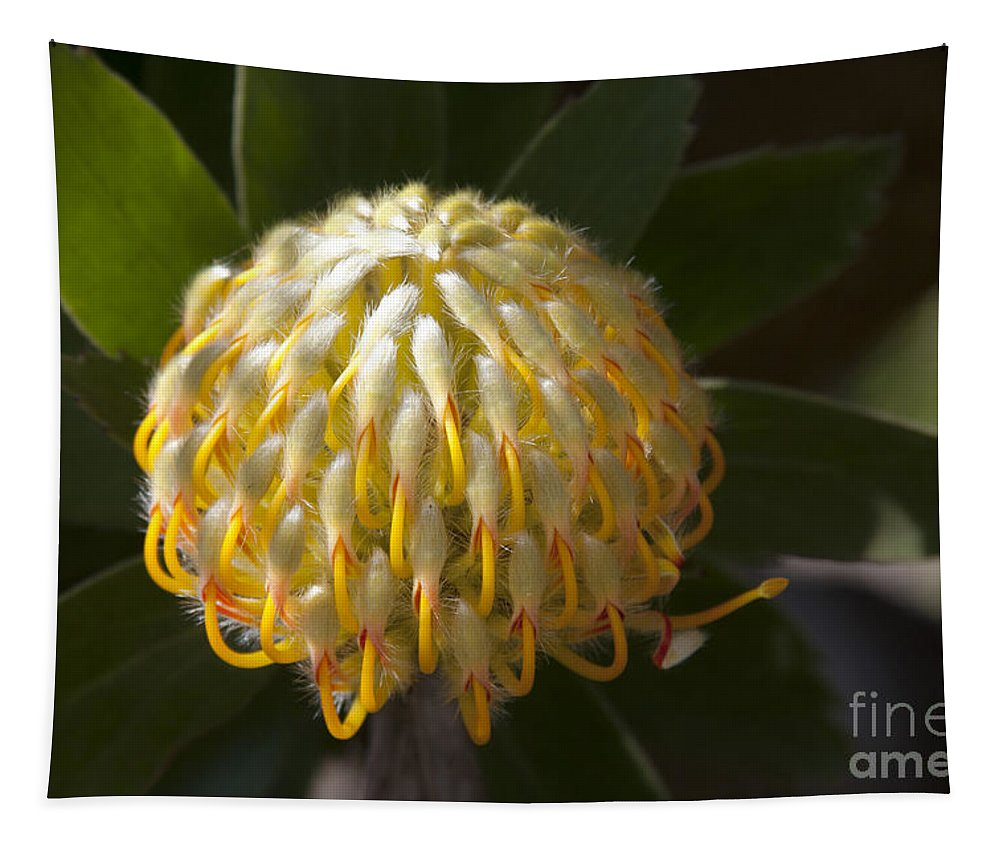 Aloha Tapestry featuring the photograph Leucospermum -  Yellow Pincushion Protea by Sharon Mau