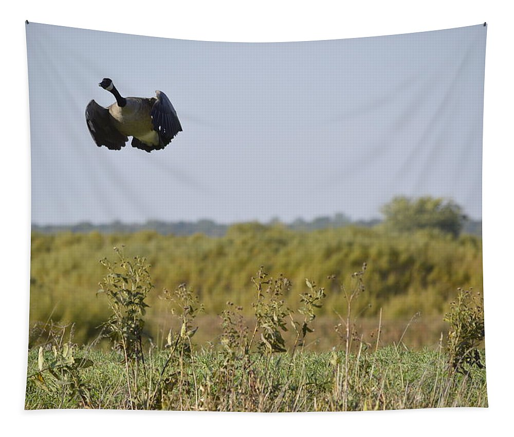 Goose Tapestry featuring the photograph Levitation by Bonfire Photography