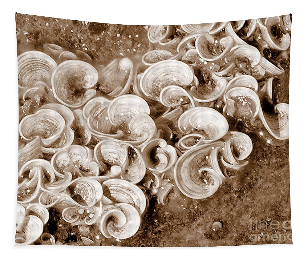 Sea Life Tapestry featuring the photograph Life On The Rocks In Sepia by Mary Deal