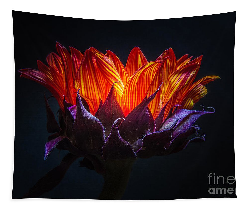 Light My Fire Tapestry featuring the photograph Light My Fire by Mitch Shindelbower