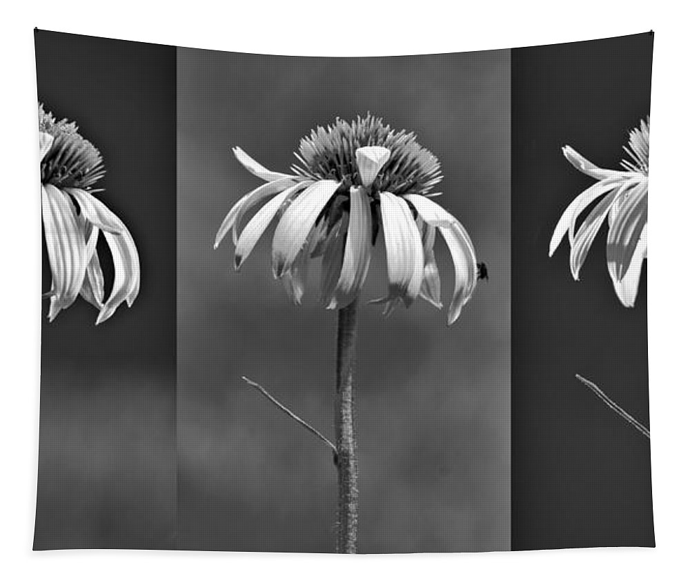 Coneflowers Tapestry featuring the photograph Light Of Day In Black And White by Nikolyn McDonald