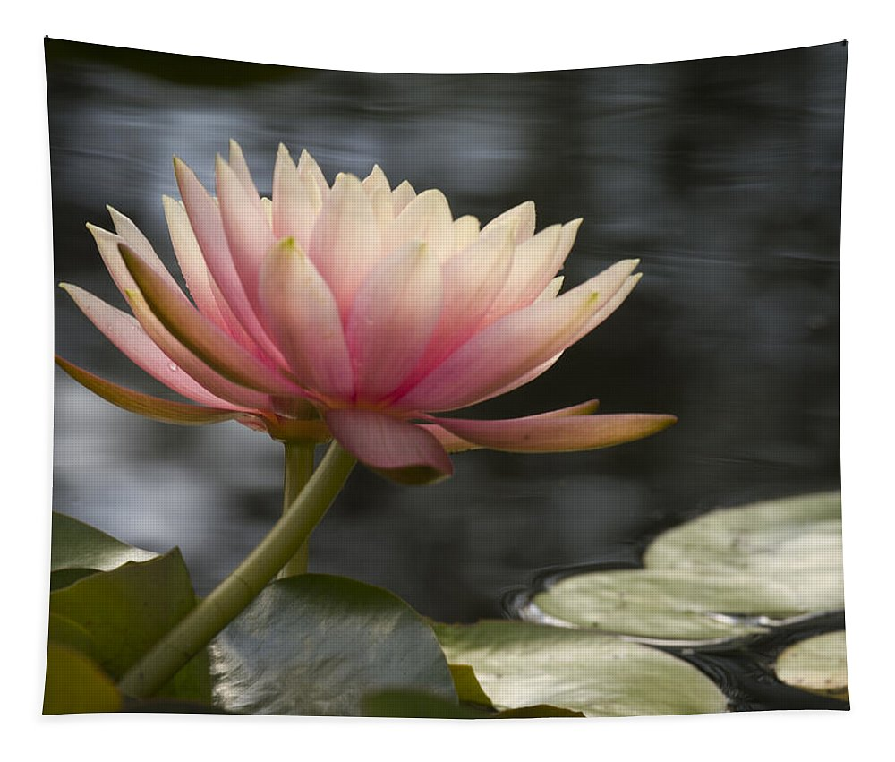 Water Tapestry featuring the photograph Light Pink Water Lily by Jean Noren