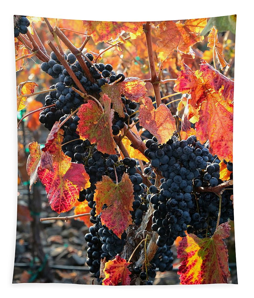Grapes Tapestry featuring the photograph Light Through Fall Vineyard by Carol Groenen