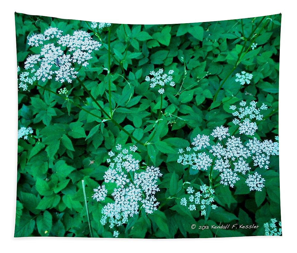 Tapestry featuring the photograph Like Queen Annes Lace by Kendall Kessler