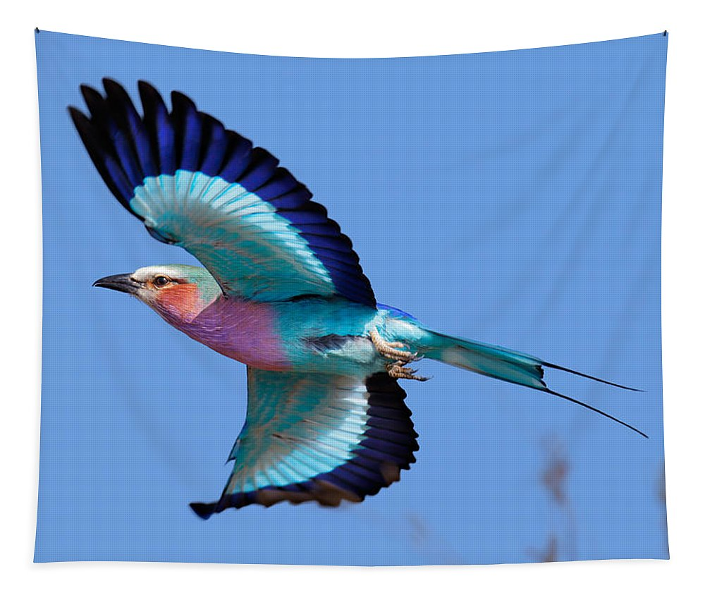 Lilac-breasted Tapestry featuring the photograph Lilac-breasted Roller In Flight by Johan Swanepoel