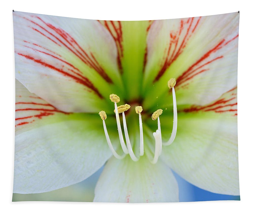 Stigma Tapestry featuring the photograph Lily -lilium by Csaba Friss