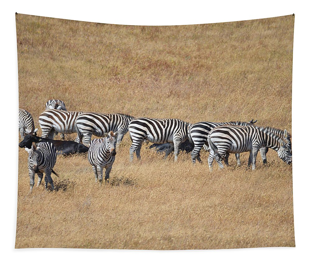 Zebra Tapestry featuring the photograph Line Em Up by Lynn Bauer
