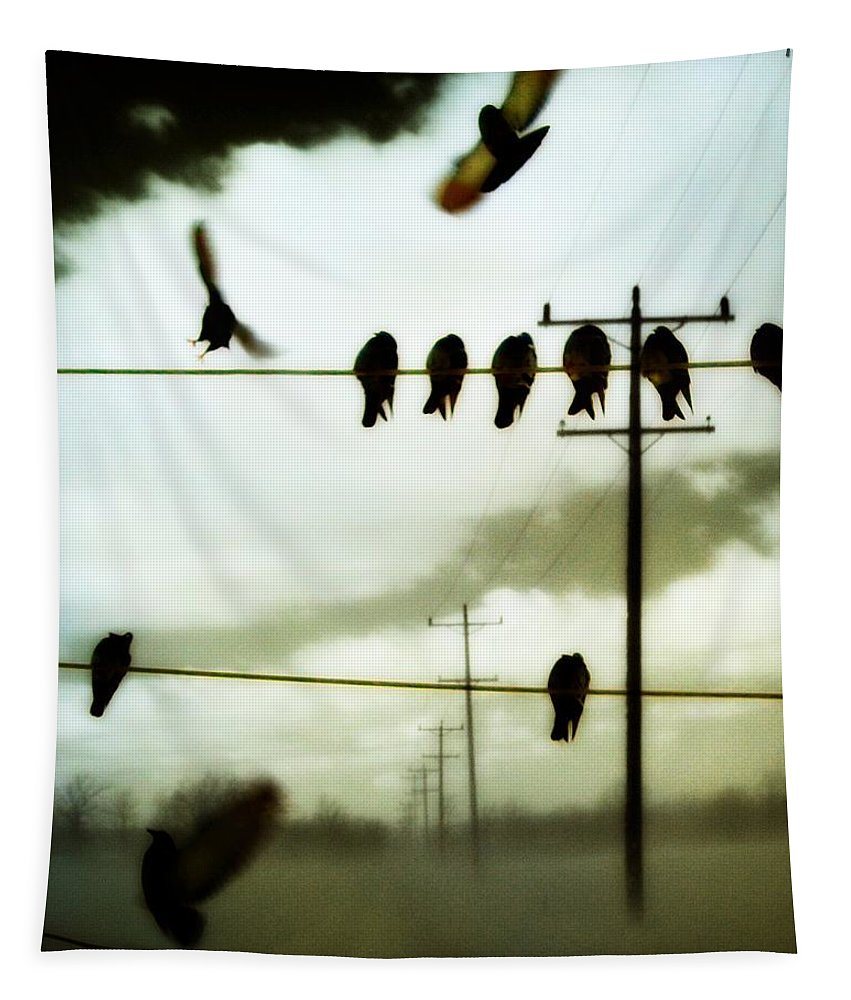 Birds Tapestry featuring the photograph Abstract Bird Lines by Gothicrow Images