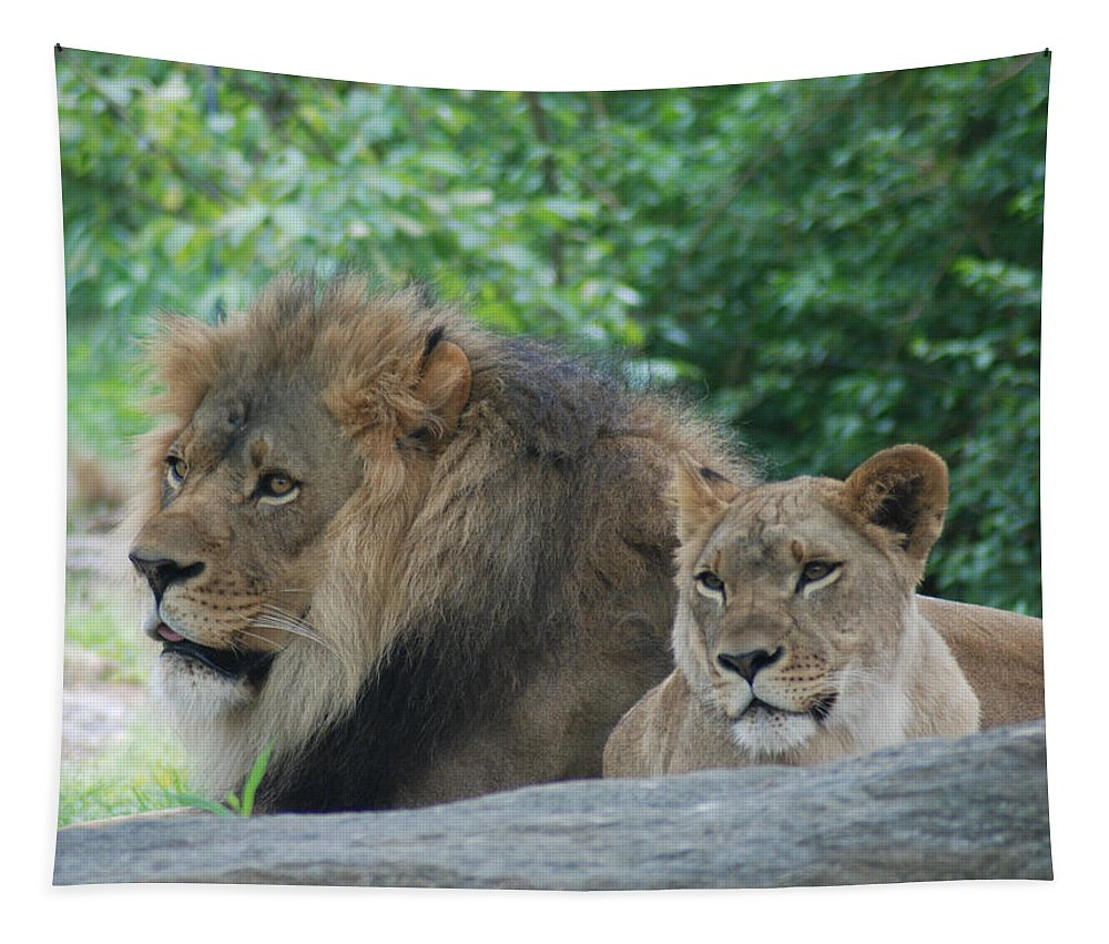 Lion Tapestry featuring the photograph Lion Couple by Richard Bryce and Family