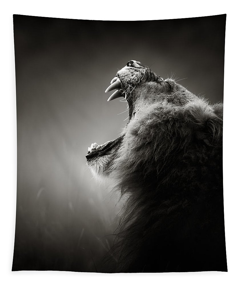 Lion Tapestry featuring the photograph Lion Displaying Dangerous Teeth by Johan Swanepoel