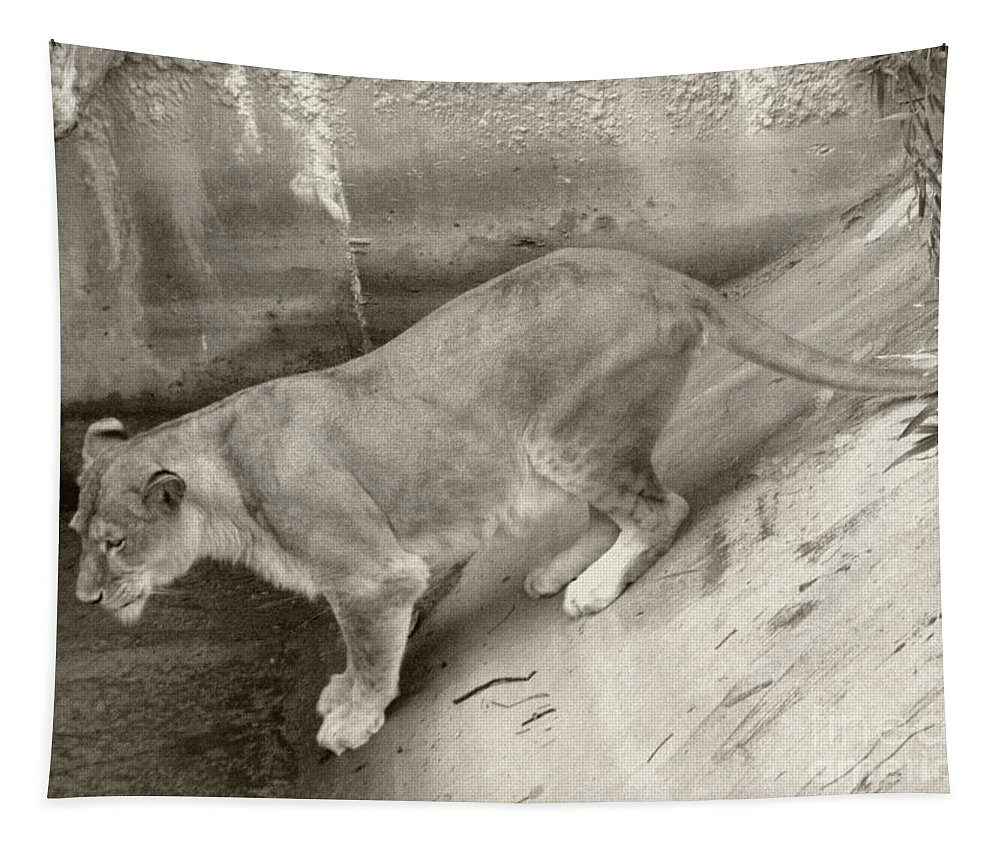 Sepia Tapestry featuring the photograph Lioness Sepia by Joseph Baril