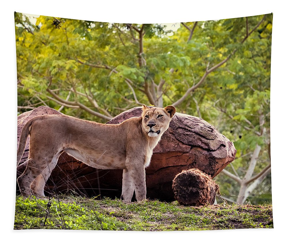 Lions Tapestry featuring the photograph Lioness by Zina Stromberg